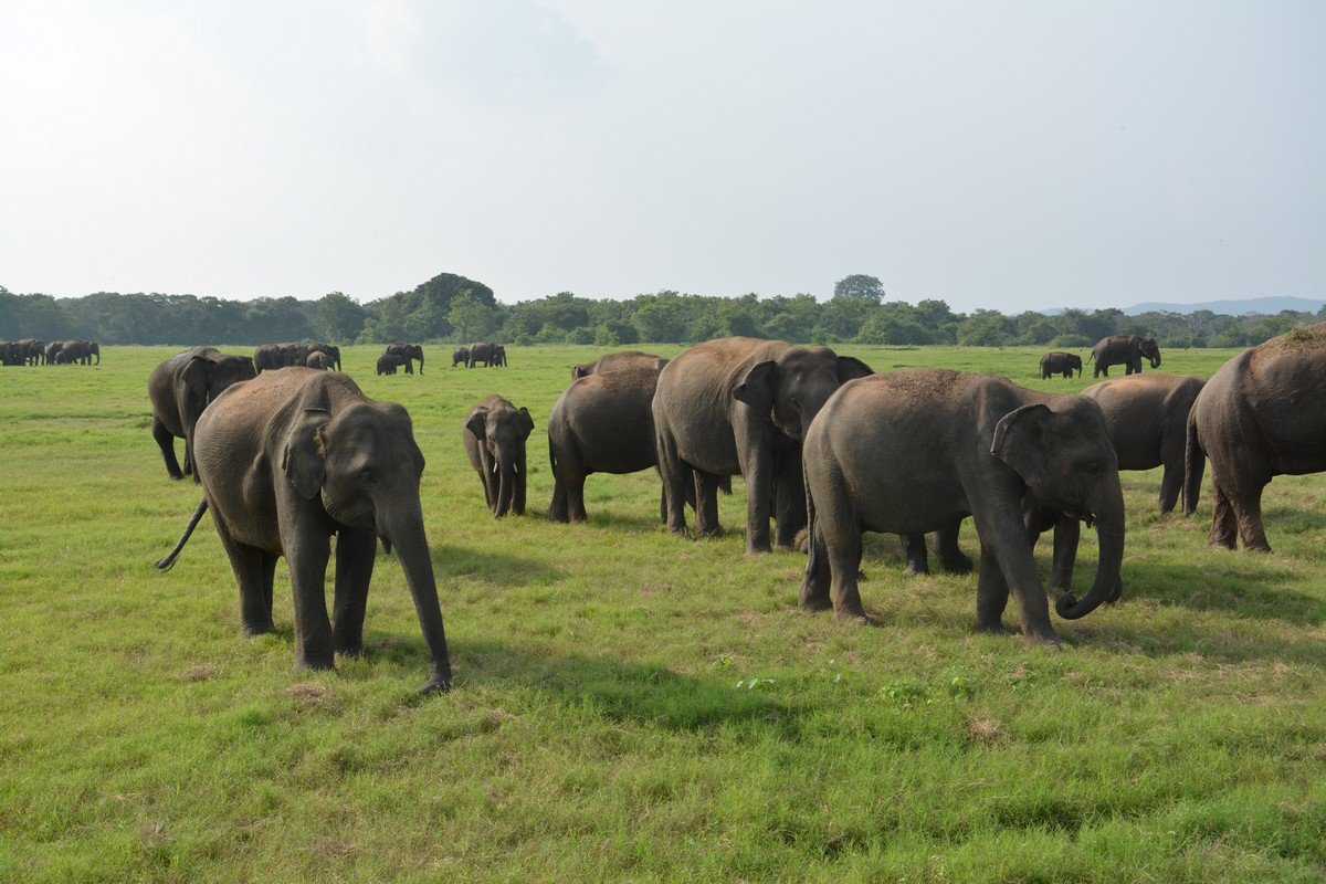 Srí Lanka s deťmi vnútrozemie