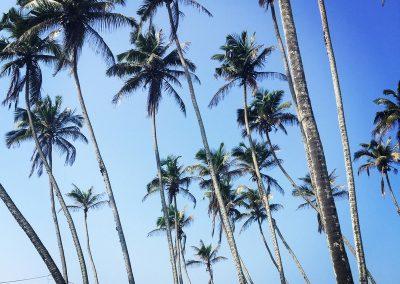 Sri-Lanka-s-detmi-plaze-11c
