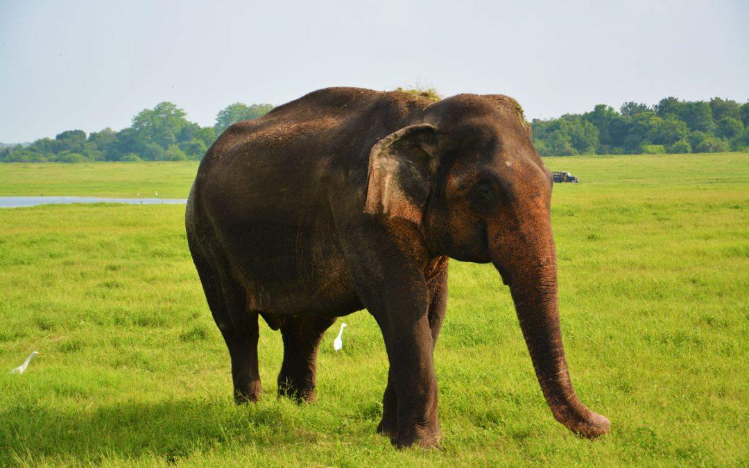 Srí Lanka s deťmi – časť 2 – vnútrozemie