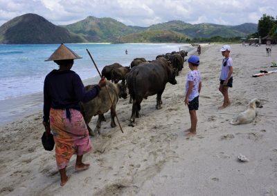 indonezia-lombok-s-detmi-1