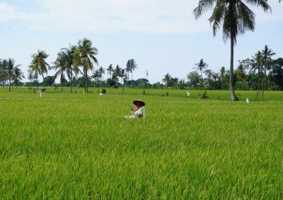 preco-vymenit-bali-za-lombok-13