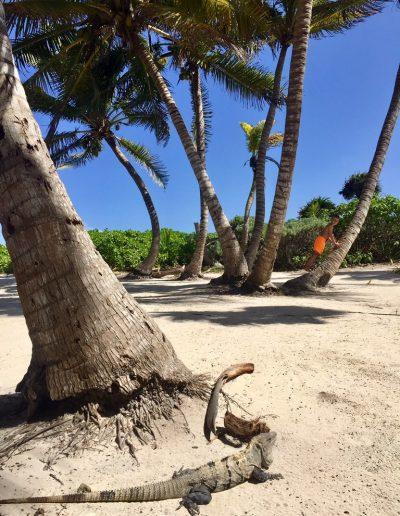 Mexiko-najkrajsie-plaze-34